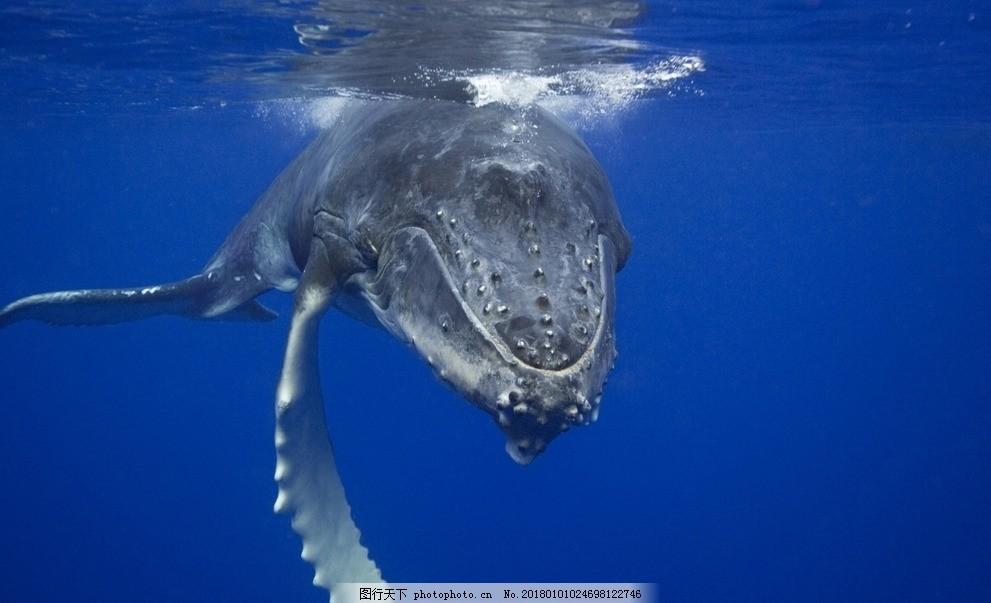 壁纸 动物 海洋动物 桌面 991_603