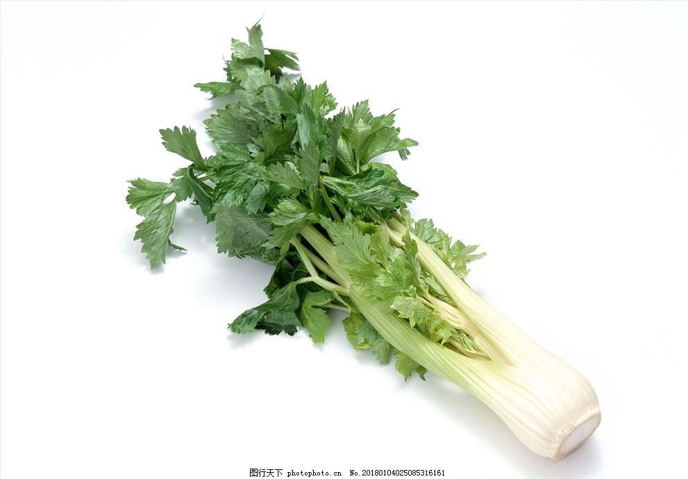 芹菜 蔬菜 食物 食材 摄影 素材 蔬菜摄影 摄影 生物世界 蔬菜 350dpi