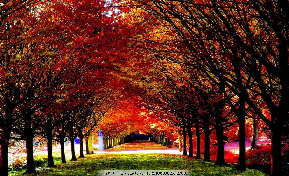 枫叶树林高清风景区