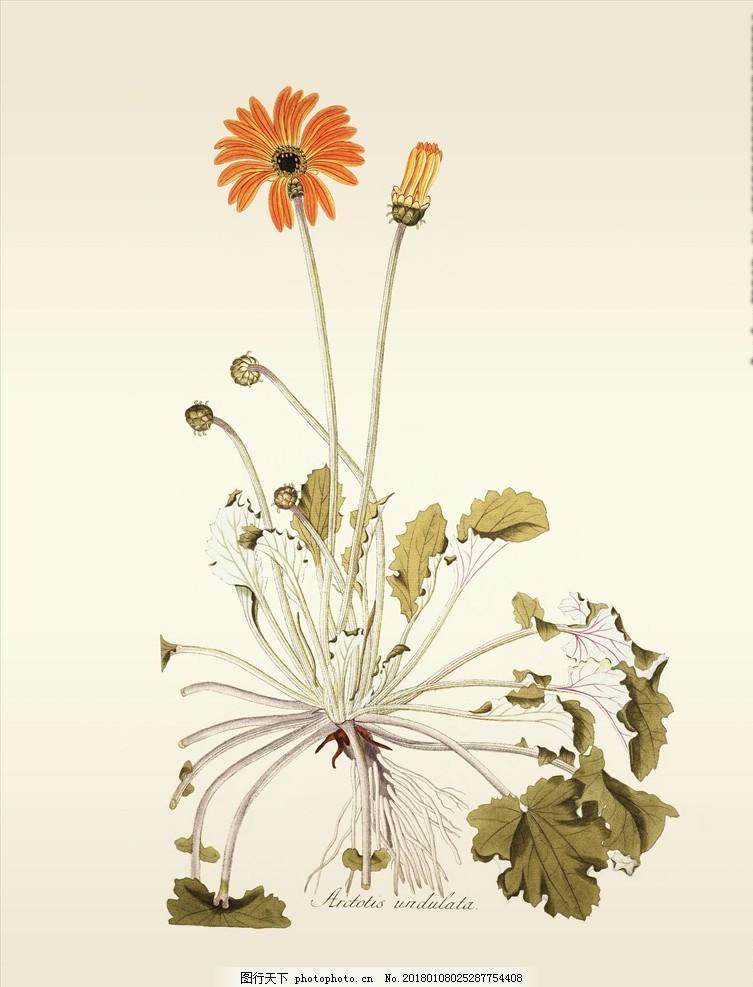 手绘植物插画 图鉴 生物图鉴 蝴蝶 手绘画 水彩画 手绘花朵 兰花插画