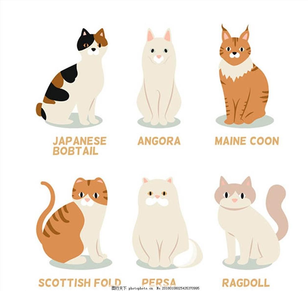 宠物猫咪设计