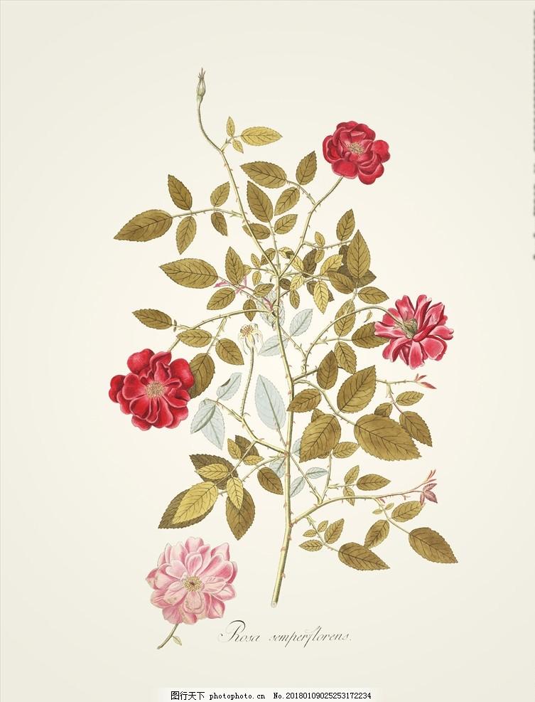 手绘植物插画 图鉴