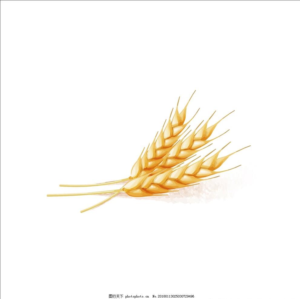 矢量素材 稻穗 金黄色的小麦 抽象麦穗 小麦 手绘麦穗 简约麦穗 麦穗