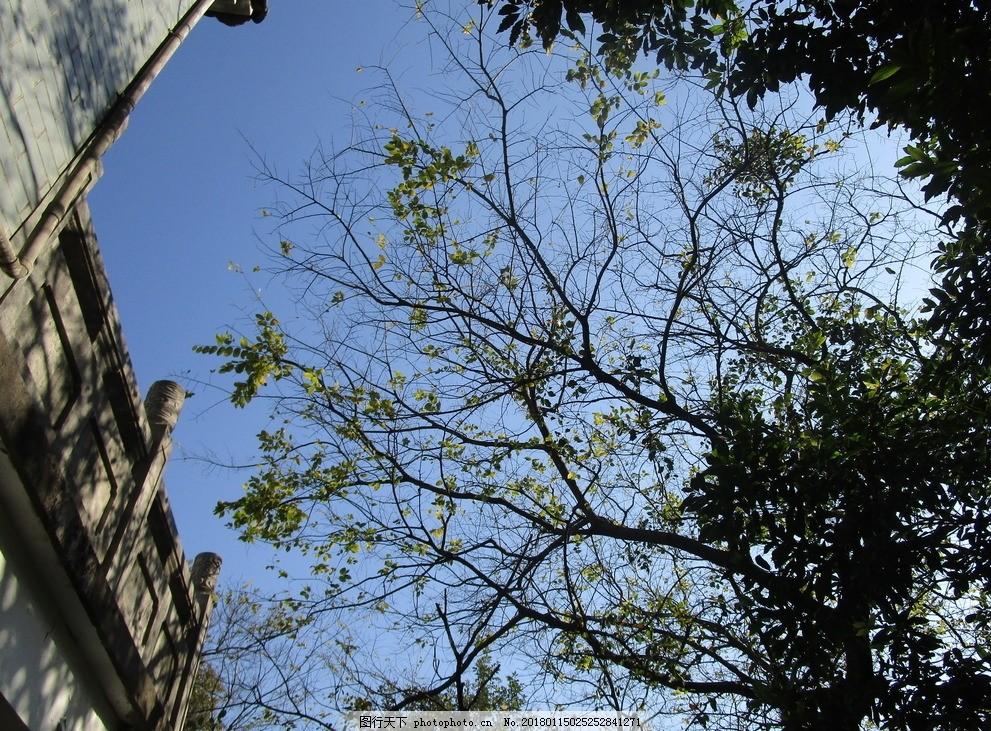 院树 树纹 大树 树干 枝丫 树枝 枝干 自然风景 摄影