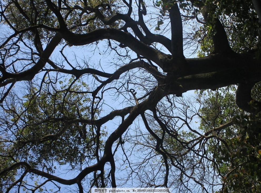 树影 树纹 大树 树干 枝丫 树枝 枝干 纹理素材 摄影