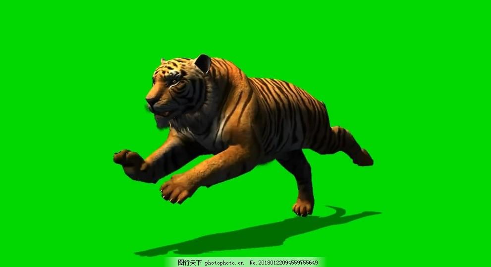 老虎绿屏抠像视频素材 透明通道 会声会影 动物世界 狗 狮子 熊