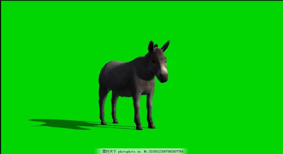 驴子绿屏抠像视频素材 透明通道 会声会影 动物世界 狗 老虎 狮子