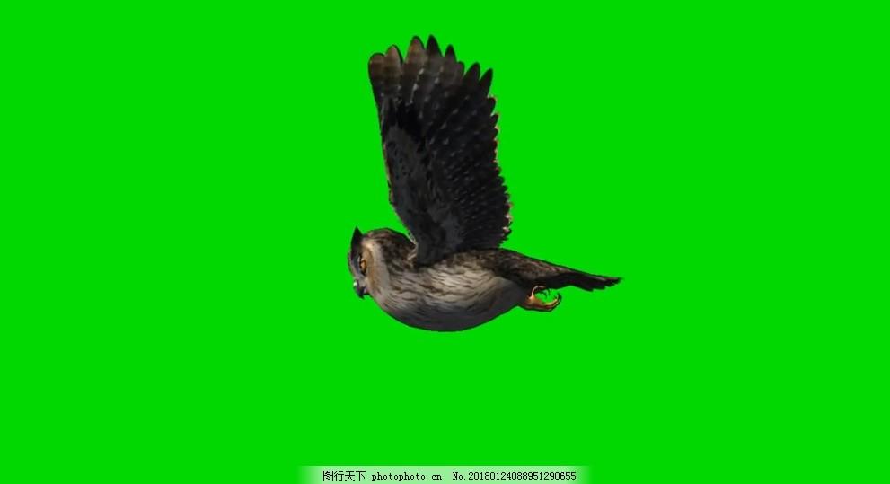 猫头鹰飞翔绿屏抠像视频素材,透明通道 会声会影 动物