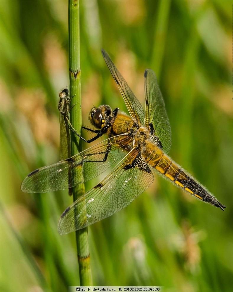 保护动物 蜻蜓 鸟 花鸟 摄影 高清 可爱 可爱动物 可爱动物 摄影 生物
