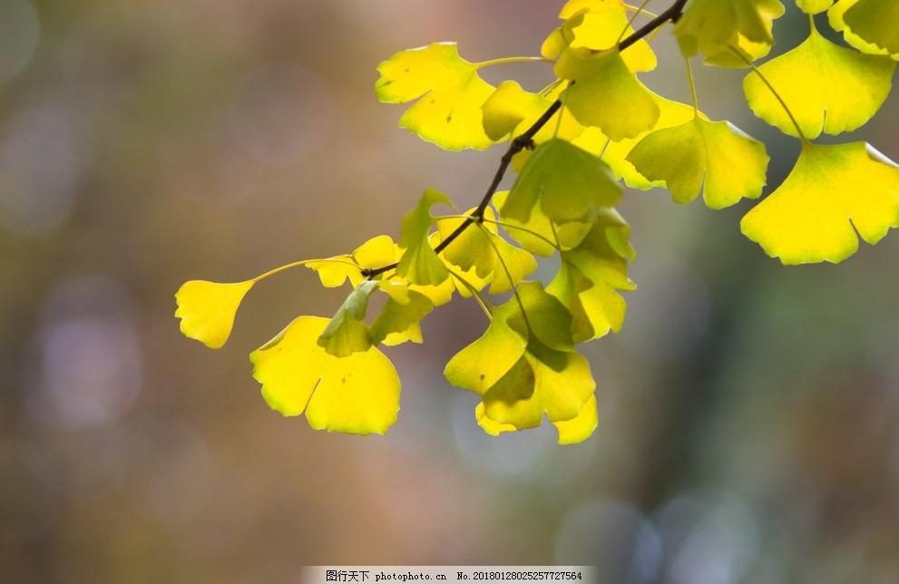 叶子 绿色 植物 树枝 天然 自然 风景壁纸 树叶 树木 摄影