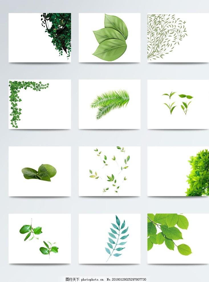手绘绿叶透明植物 一片绿叶 绿叶植物底纹 绿叶ps素材 绿色漂浮叶子