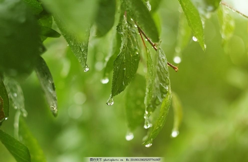 叶子 绿色 植物 树枝 天然 自然 风景壁纸 树叶 树木 水滴