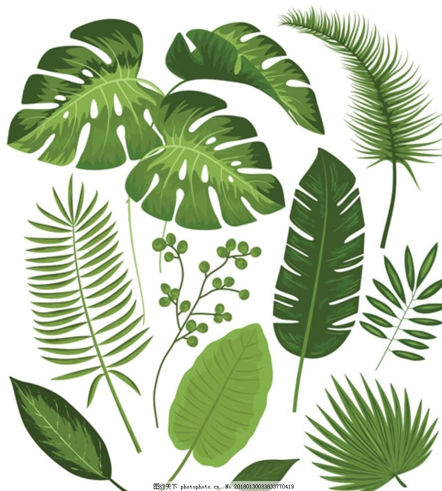 热带绿植 叶子 绿色叶子 龟背叶 芭蕉叶 棕榈叶 图片素材